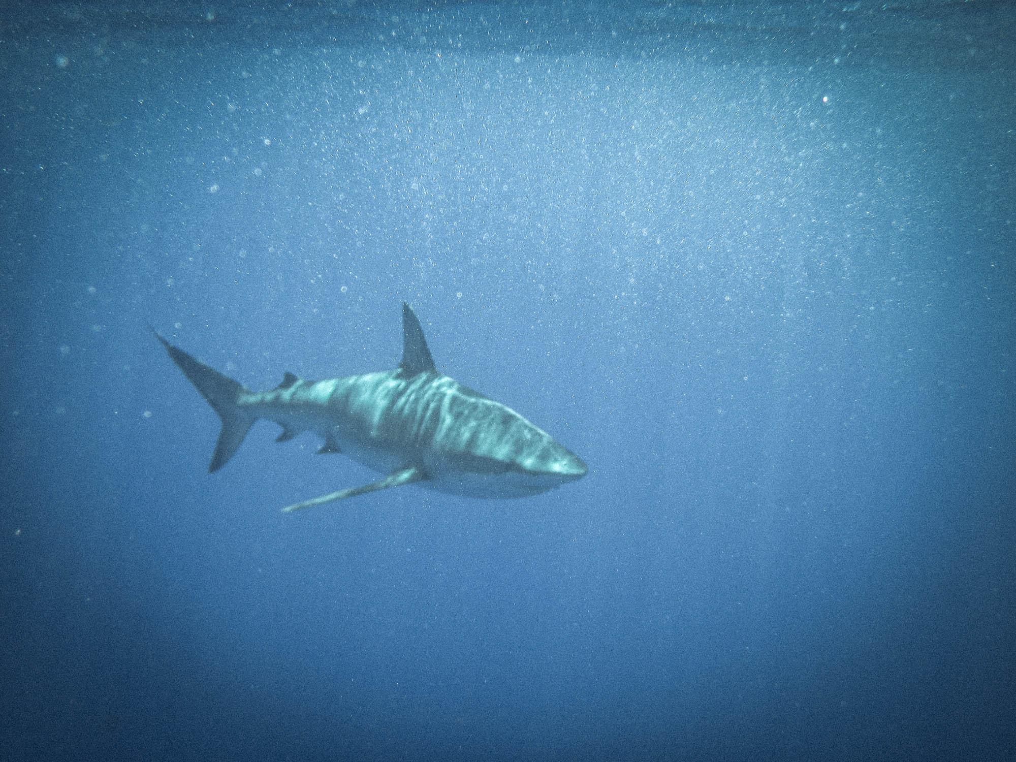Hawaii Shark Encounters