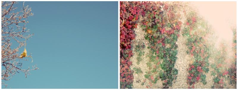 fallmorning collage.jpg