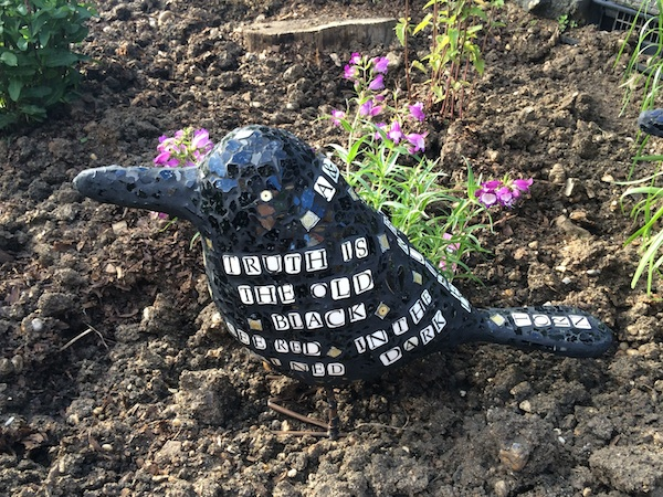 One of Shona's crows comes to rest in her garden.