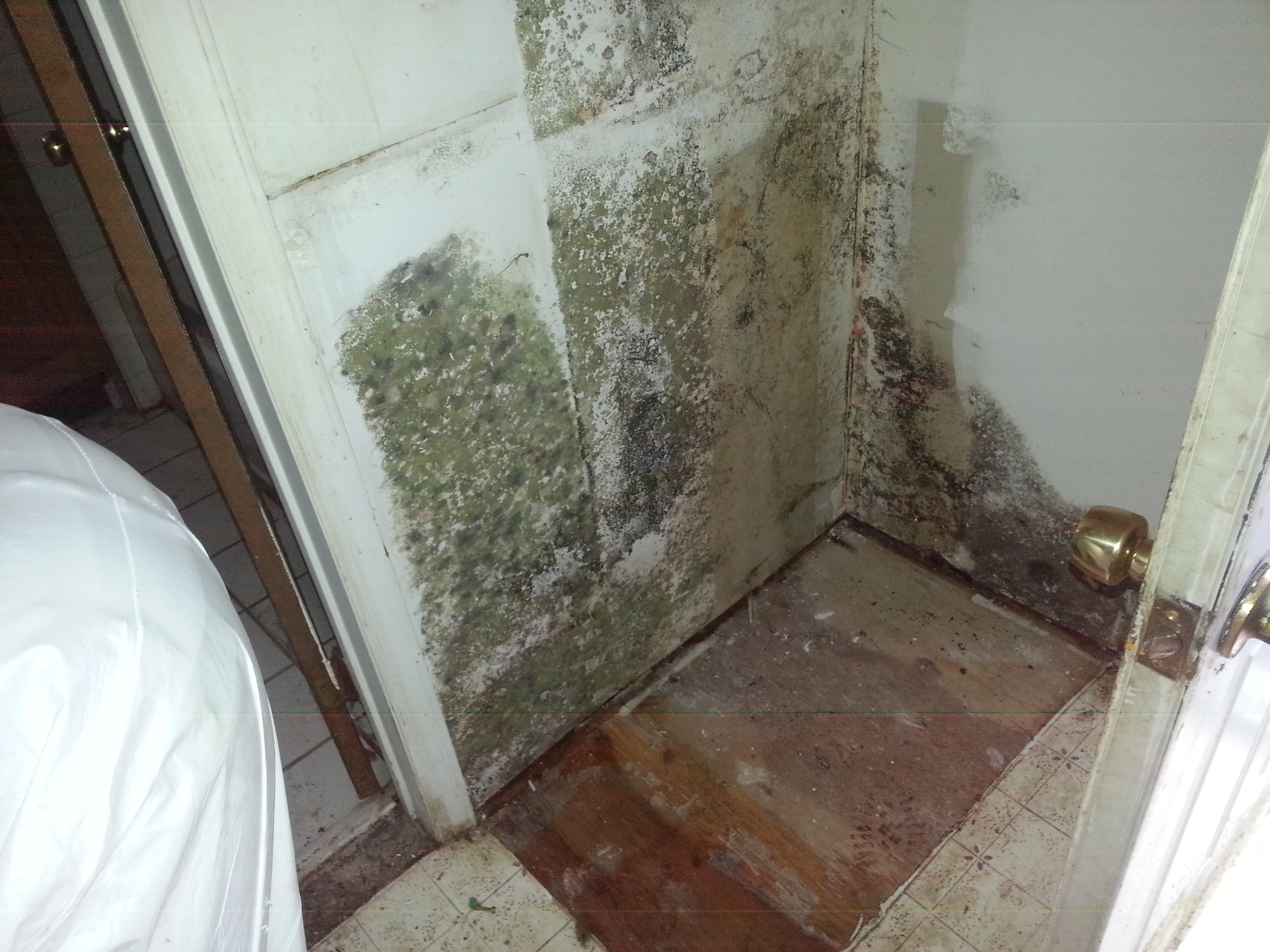 Mold. This closet needs mold remediation Services by Groundswell Contracting
