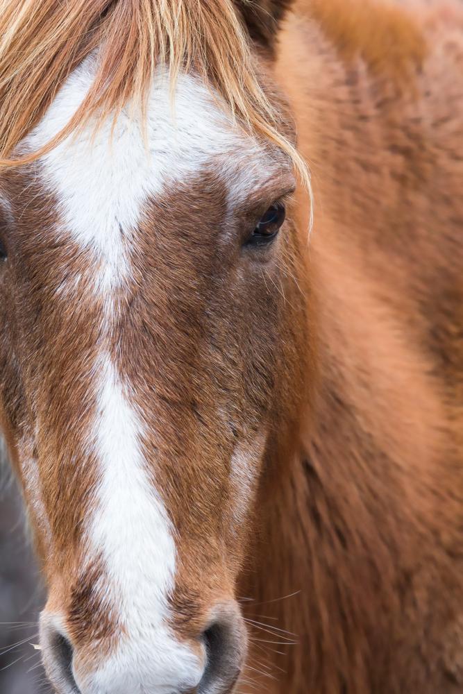 Hendricks_Horseportrait2_Tandem.jpg