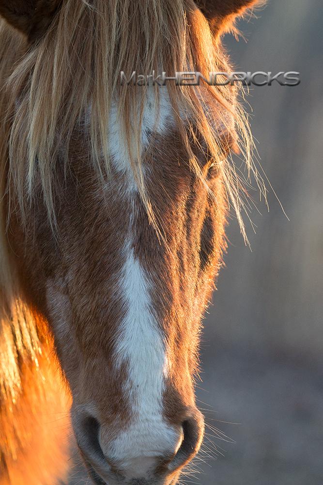 A Wild Horse- Assateague Island