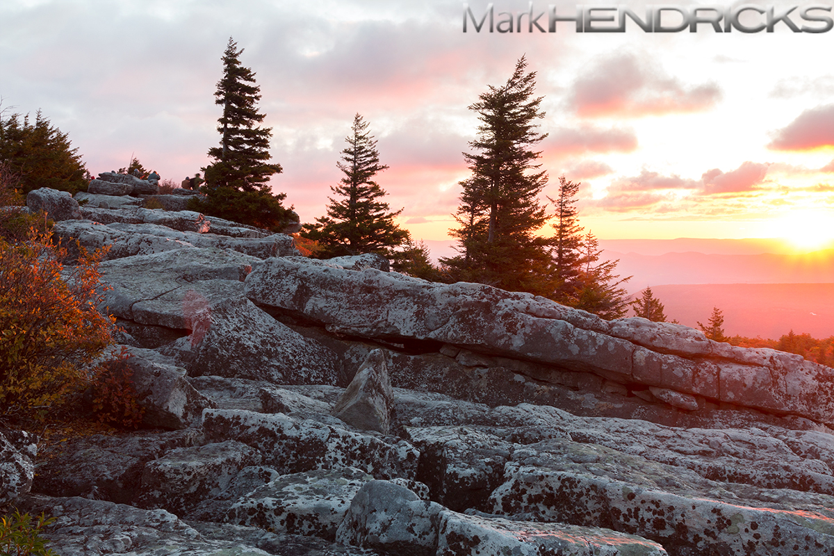 Red Spruce among the boulders of the Dolly Sods Wilderness