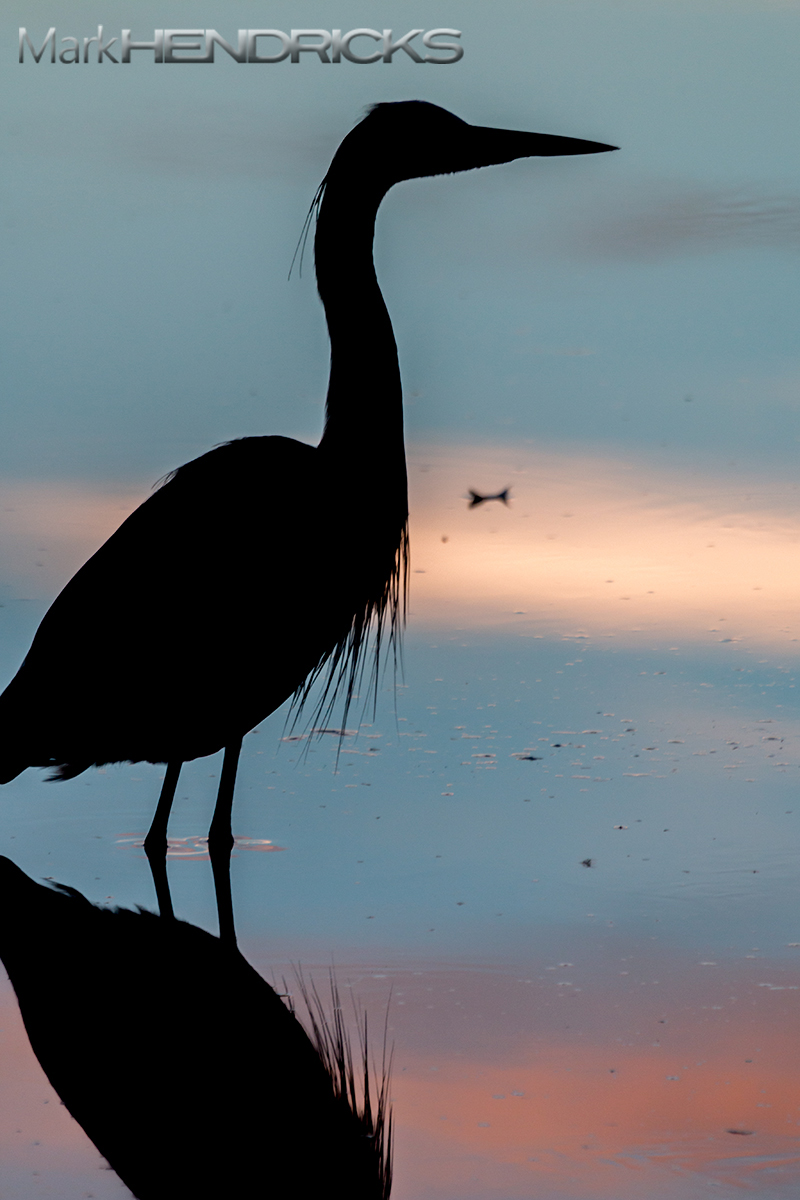 Blue Heron silhouette