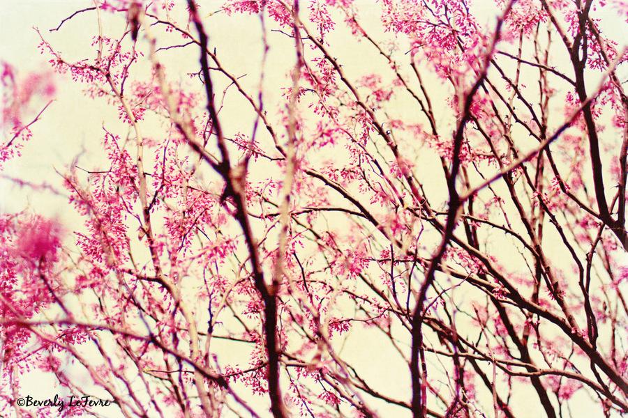 blossom wonderland