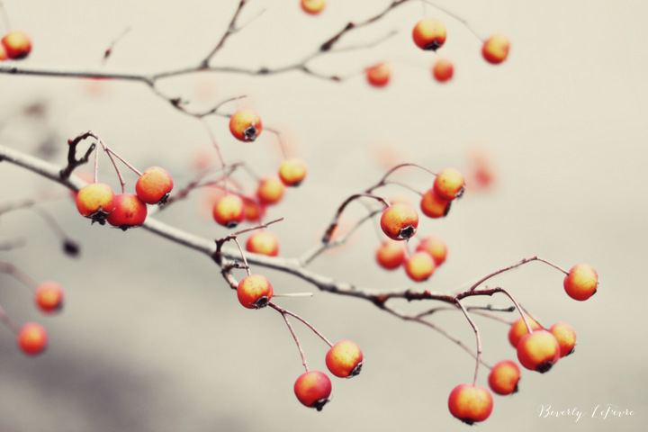 berries in the woods