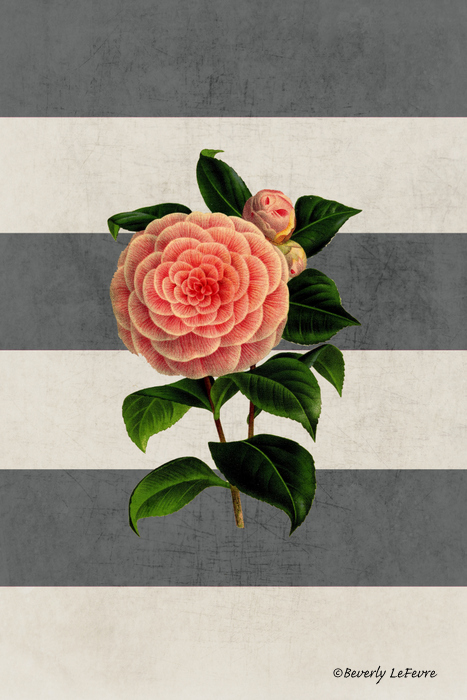 botanical stripes - camellia
