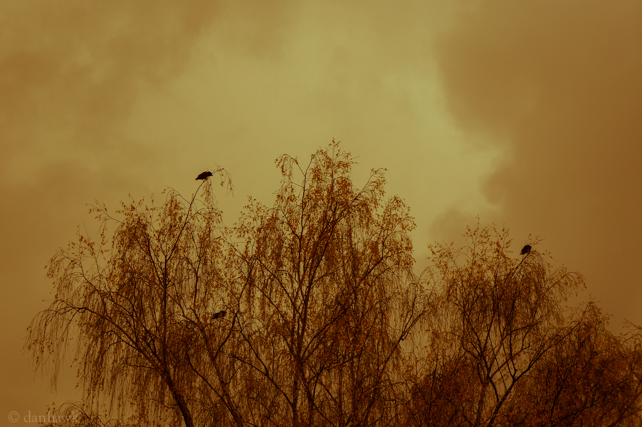 Crows | 365 Project | Oct. 24th, 2012