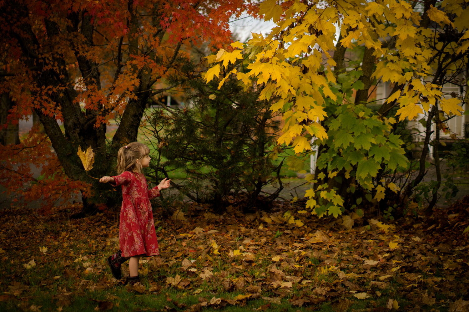Leaves and Aisy | 365 Project | Nov 22nd, 2012