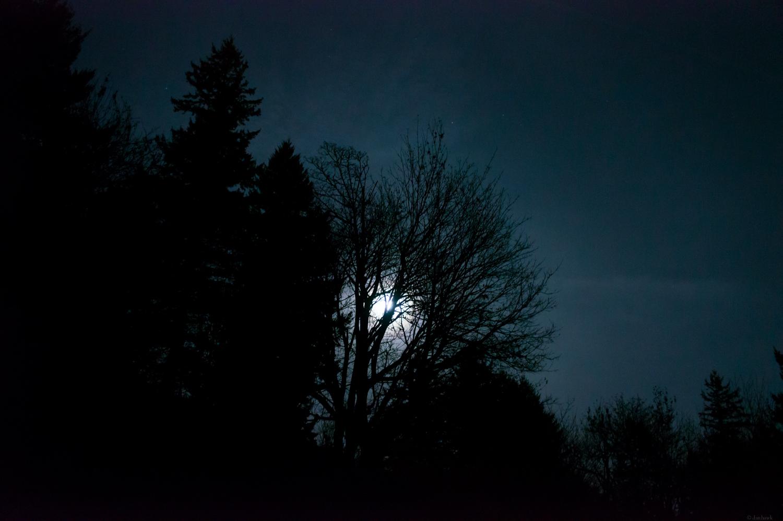 Moonlit | 365 Project | Nov 26th 2012