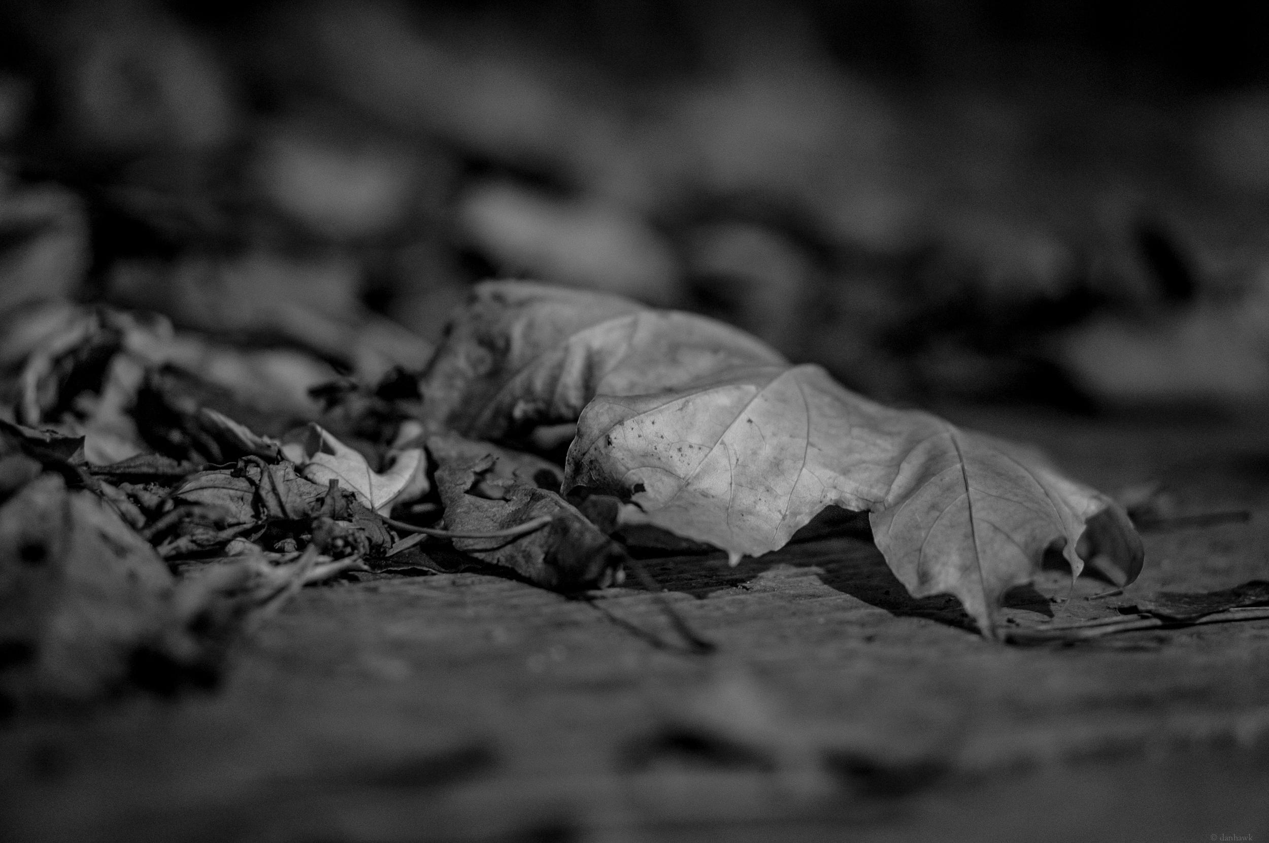 Crumpled | 365 Project | Nov 27th, 2012