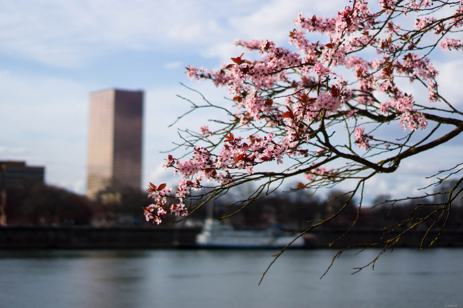 Spring in Portland | 365 Project | January 15th, 2013 | 35mm, f/1.8, ISO 100, 1/4000