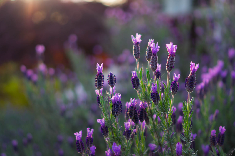 Purpleness | 365 Project | April 30th, 2013 | 35mm, f/1.8, ISO 200, 1/640