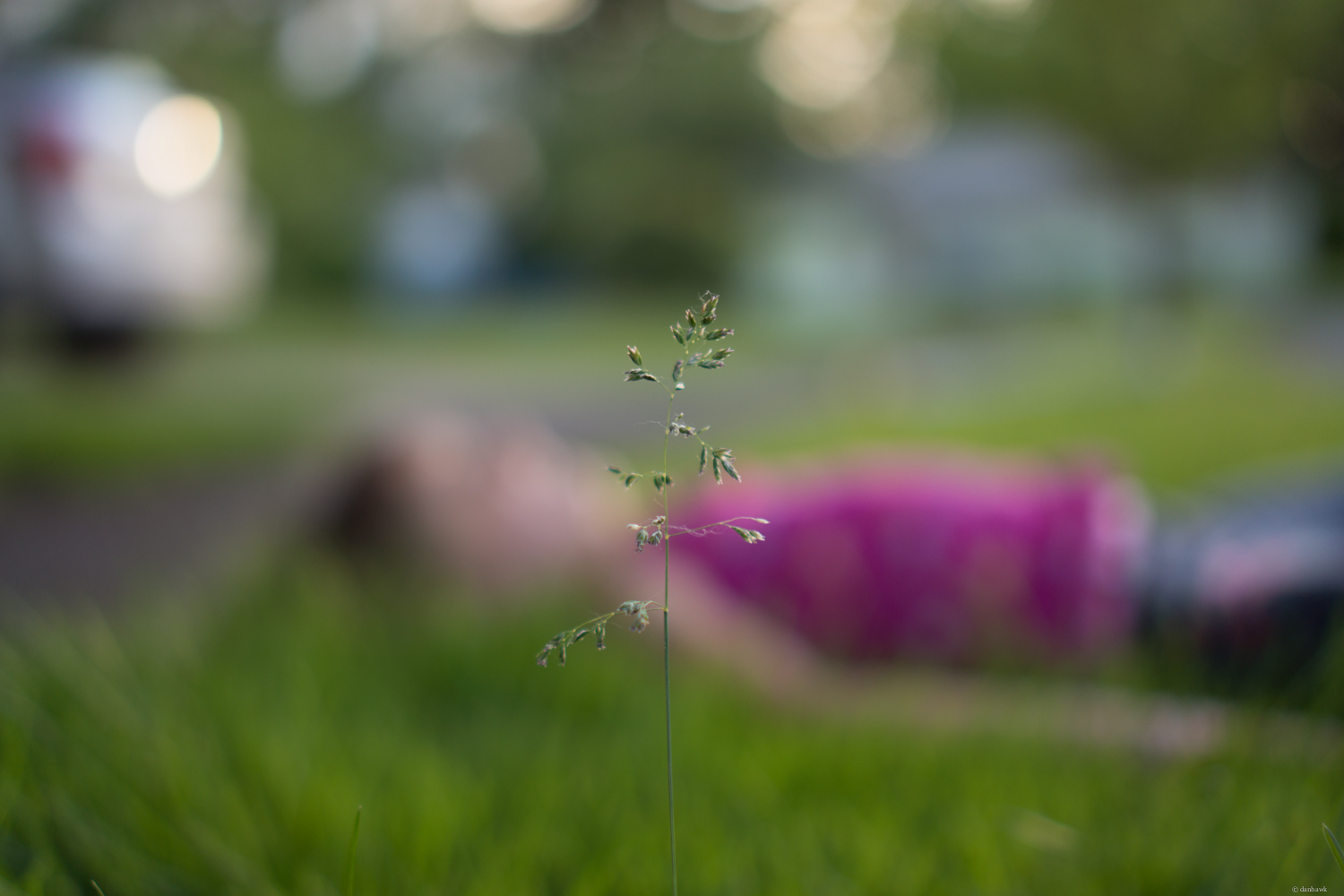Laying in the Grass | 35mm, f/1.8, ISO 100, 1/320