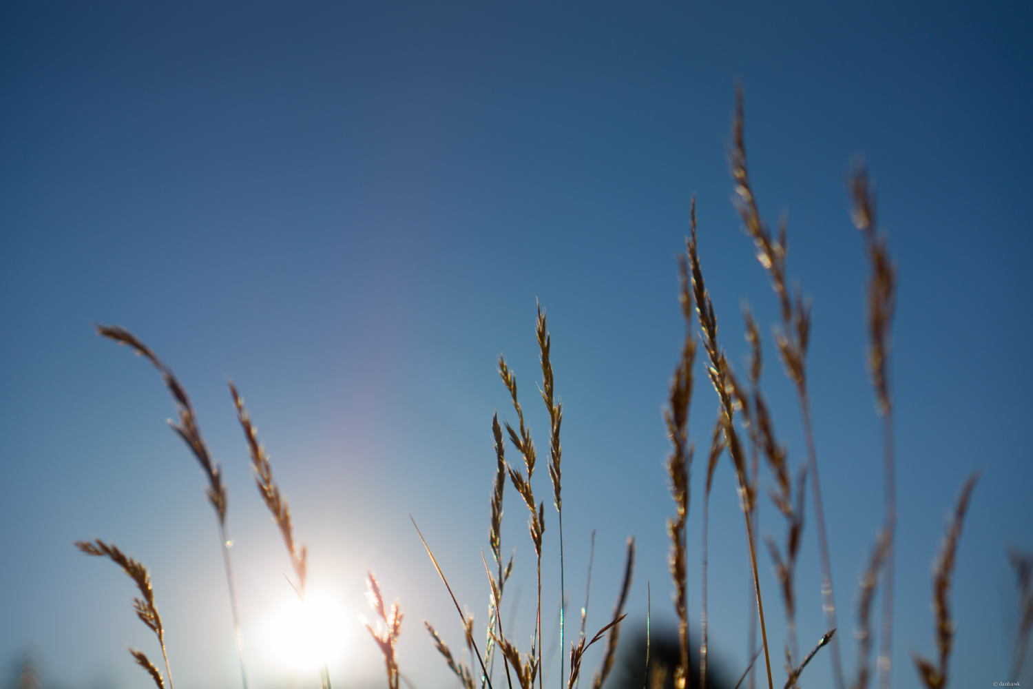 Growing By Sun | 365 Project | July 20th, 2013 | 35mm, f/2.8, ISO 100, 1/4000