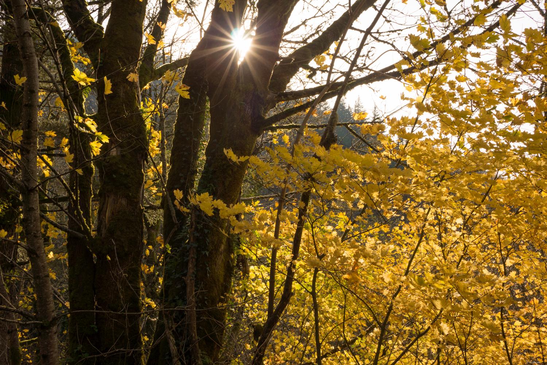 Mid Afternoon Horizontal light.jpg