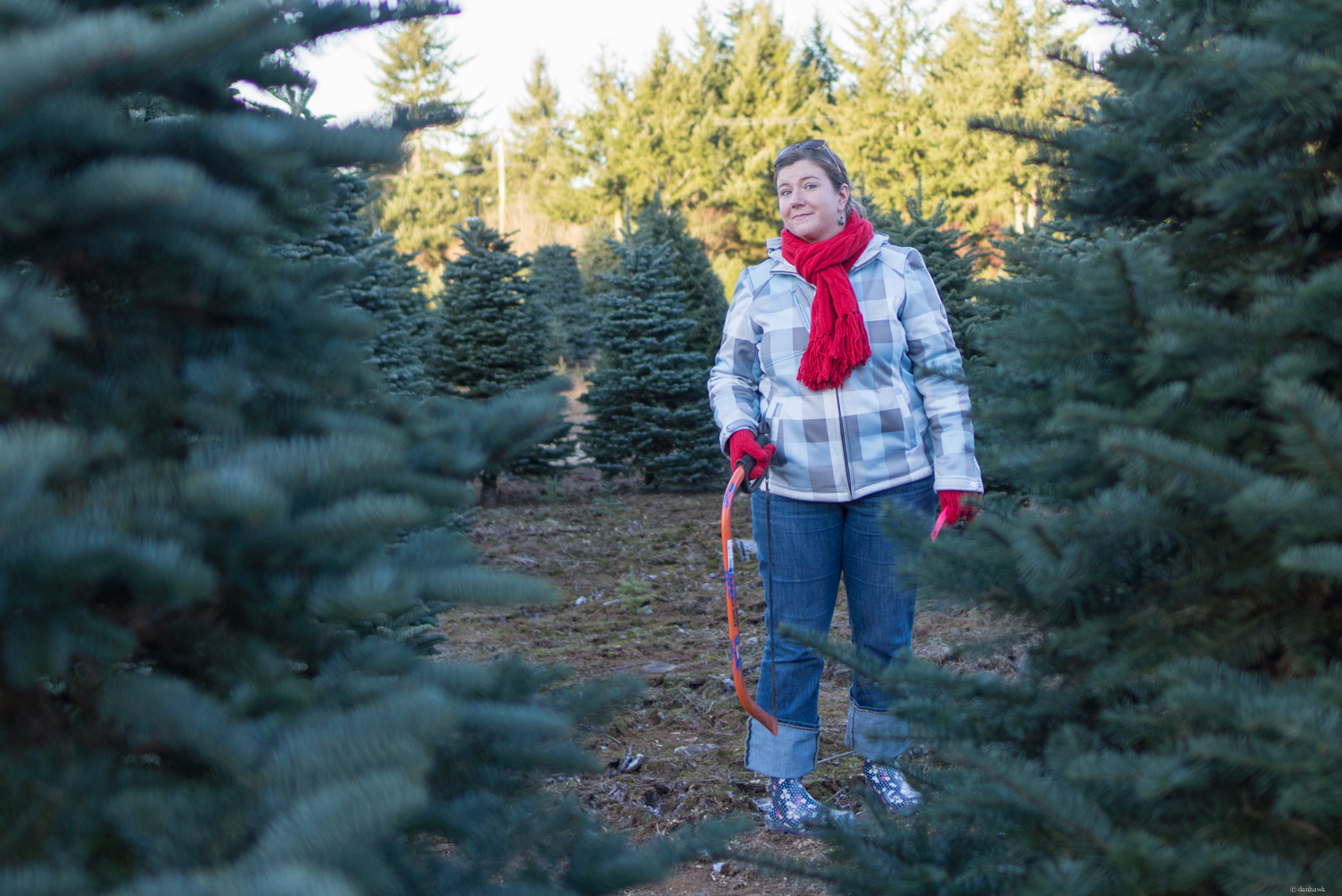 Emily Hawk, Christmas Tree Hunter | Dec 8th