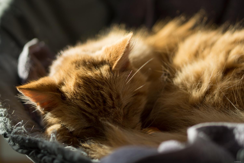 Bob the Cat.jpg