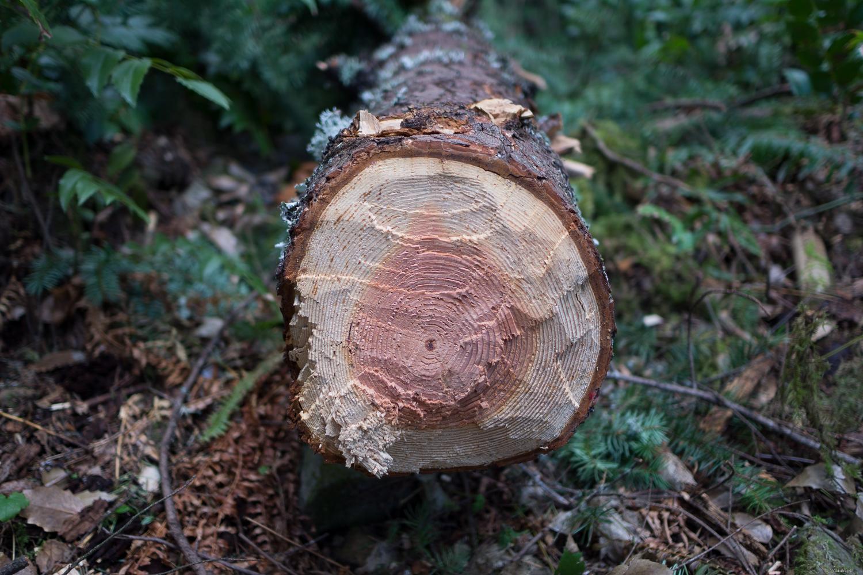 Beaver or Axe.jpg