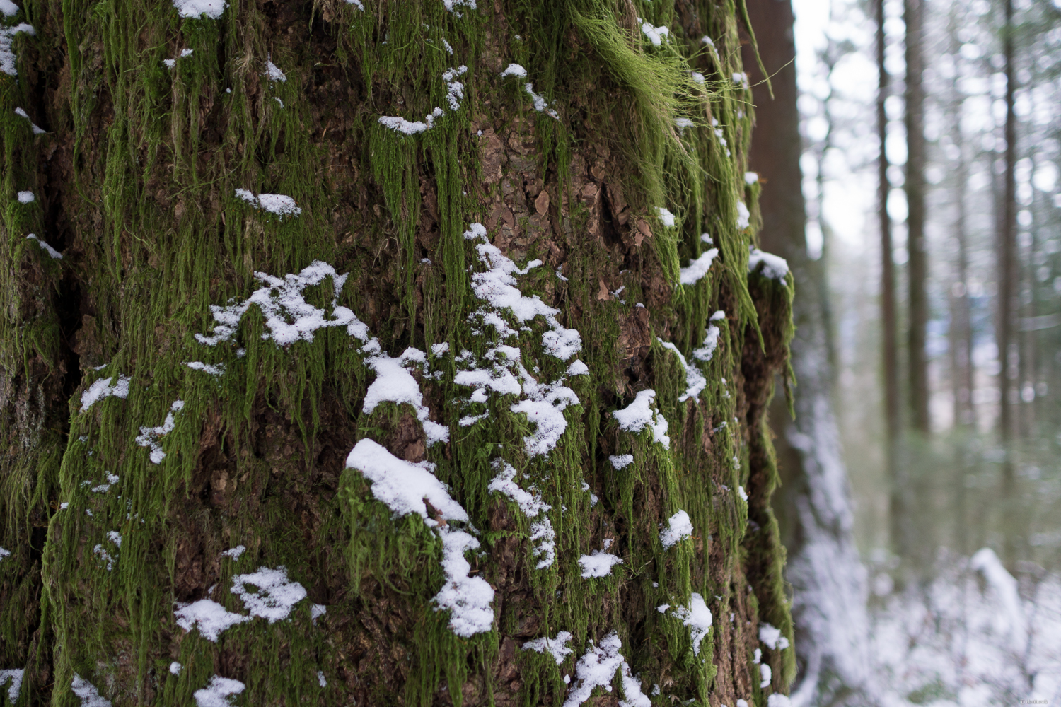 moss and snow.jpg