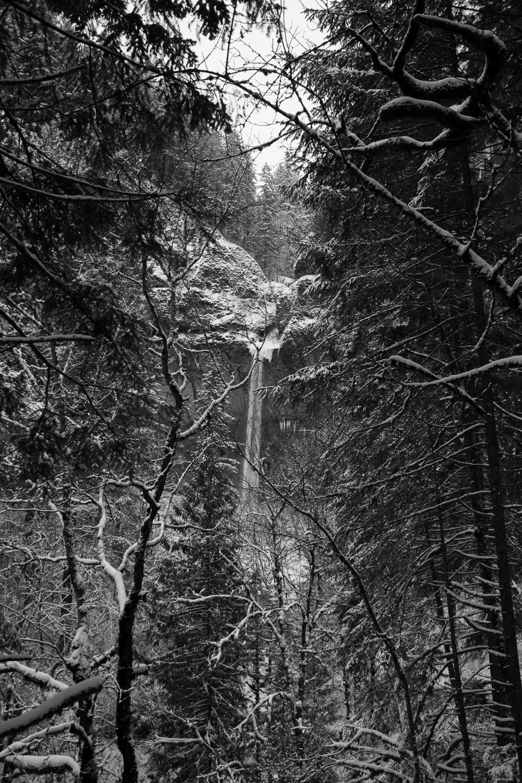 through the forest.jpg