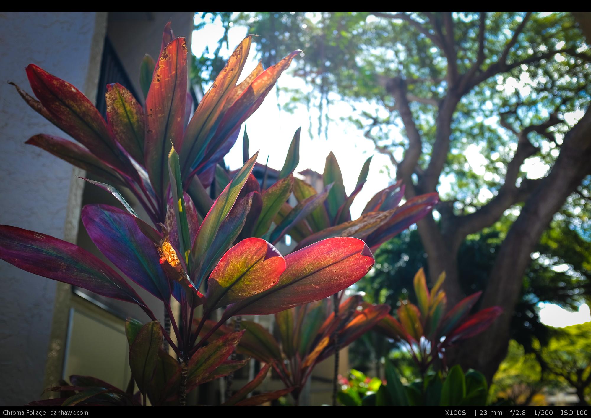 Chroma Foliage