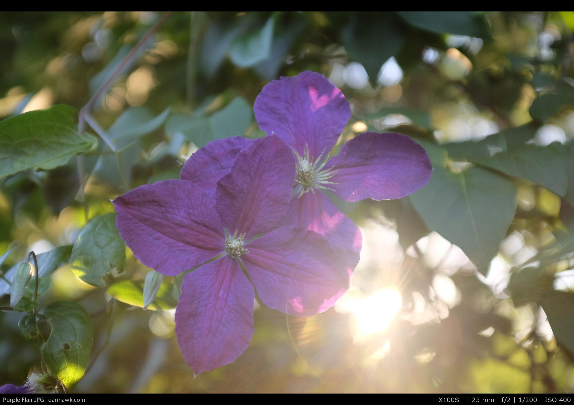 JPEG, Std Provia on Camera -no edits