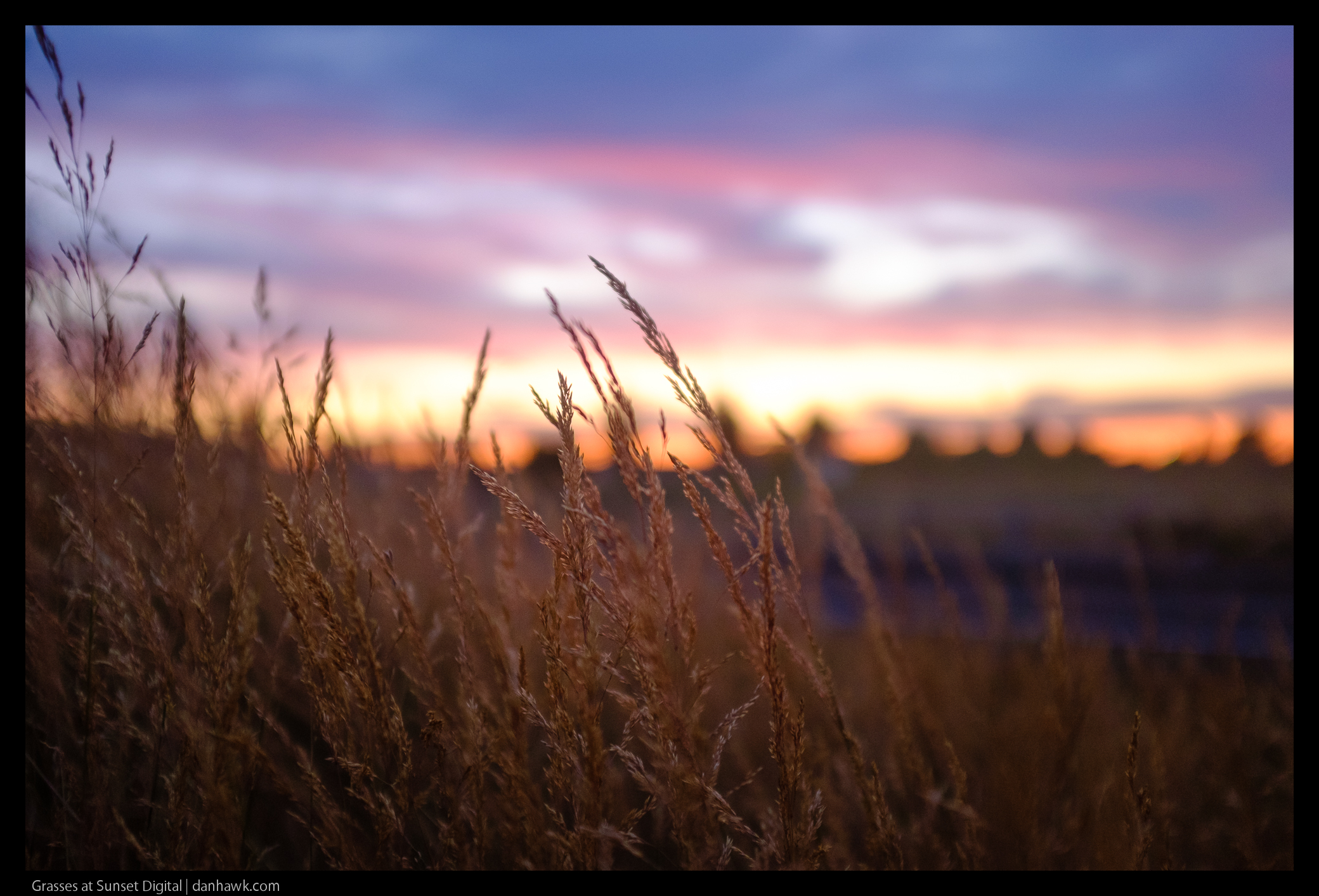 Grasses at Sunset Digital