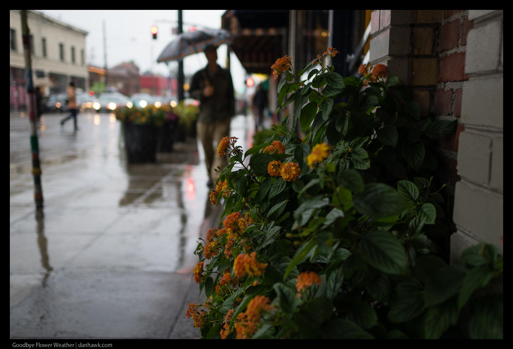 Goodbye Flower Weather