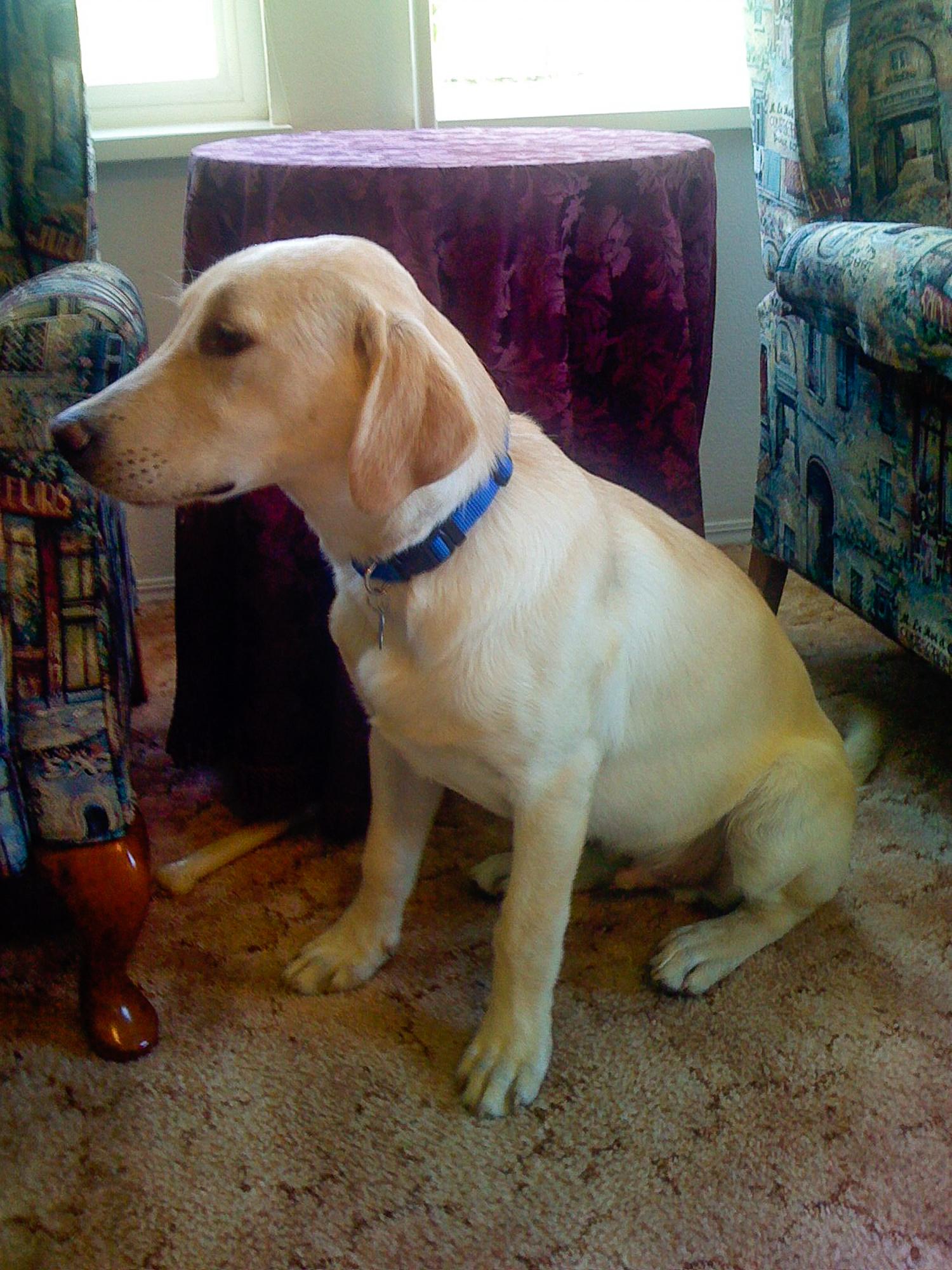 Cooper Puppy.jpg