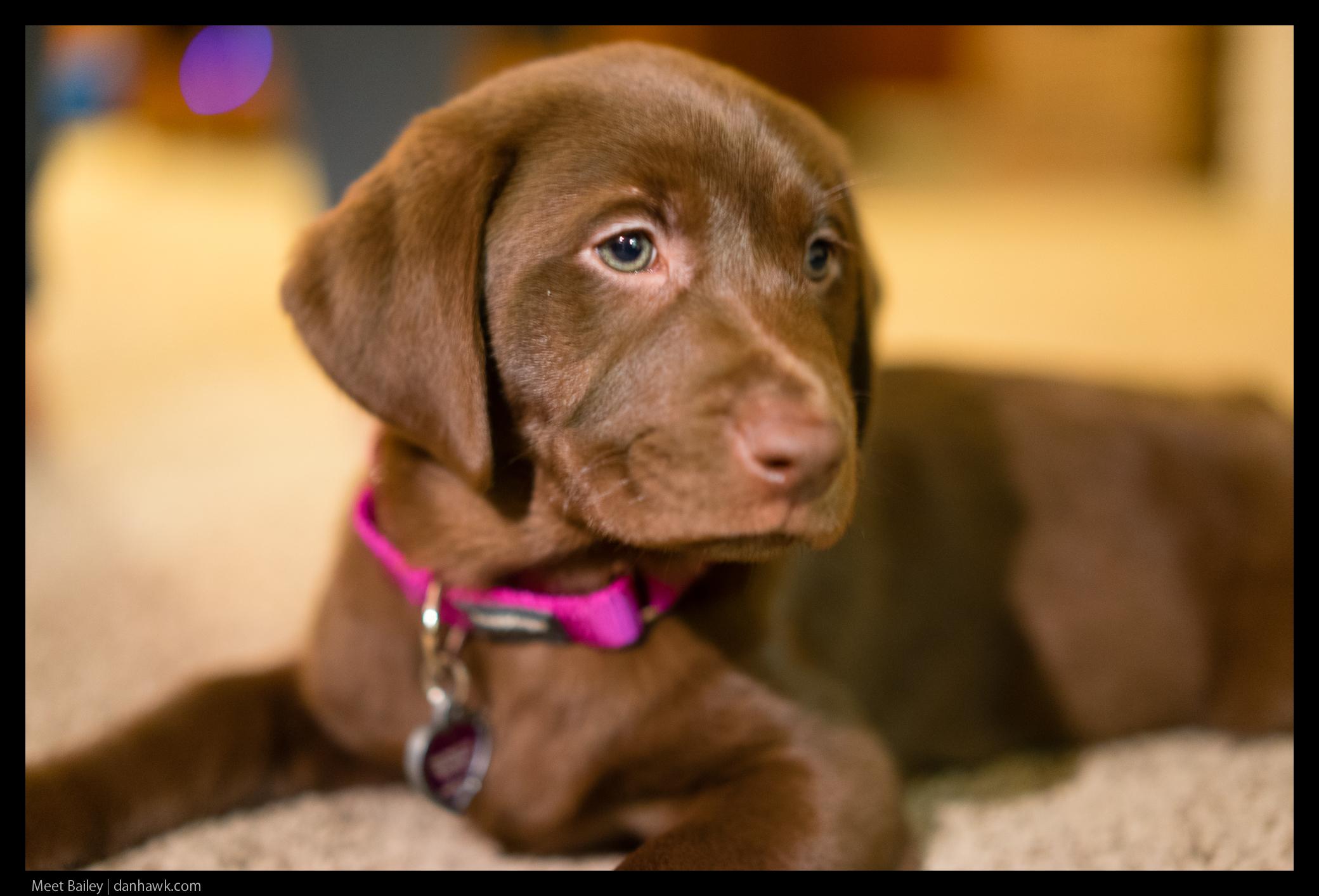 Meet Bailey