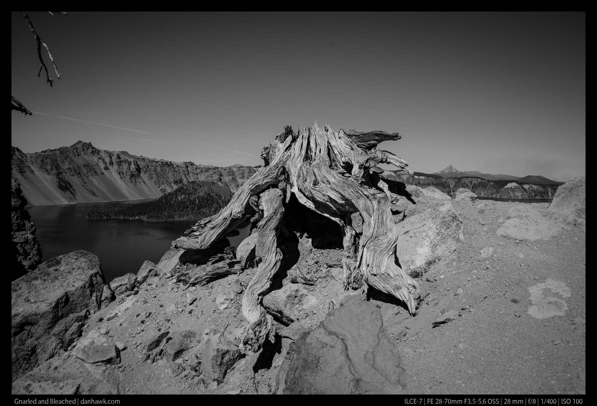 Gnarled and Bleached