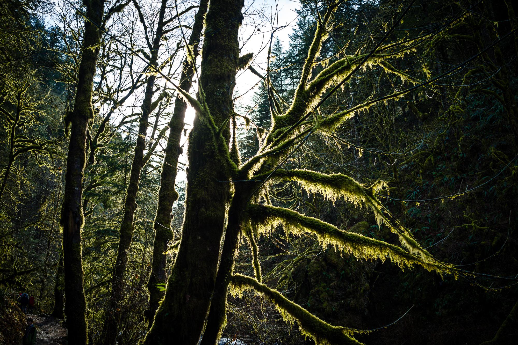 Wahclella Falls Trip-5.jpg