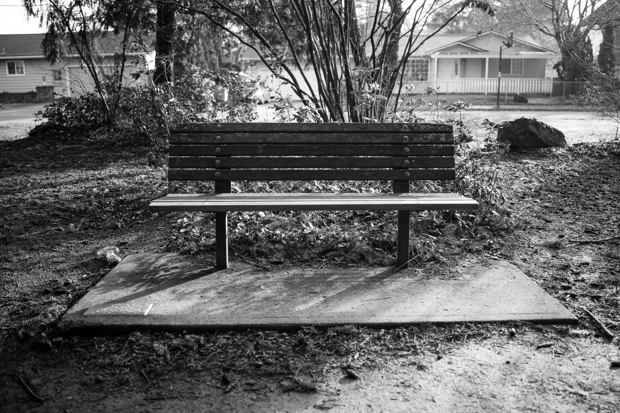 The Park Bench we pass daily.
