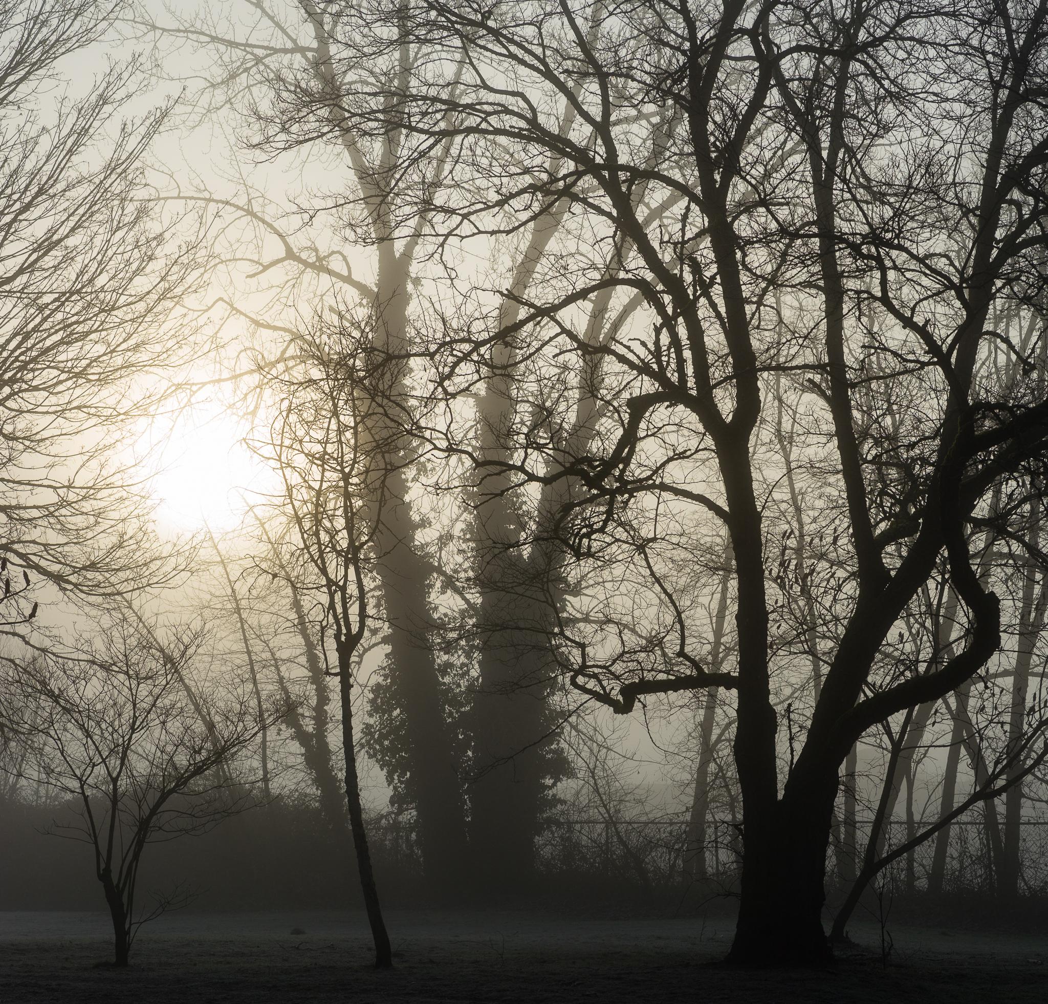 Fog and Branch.jpg
