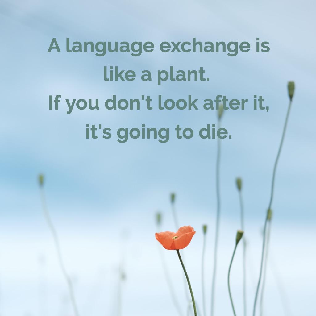 language exchange.png