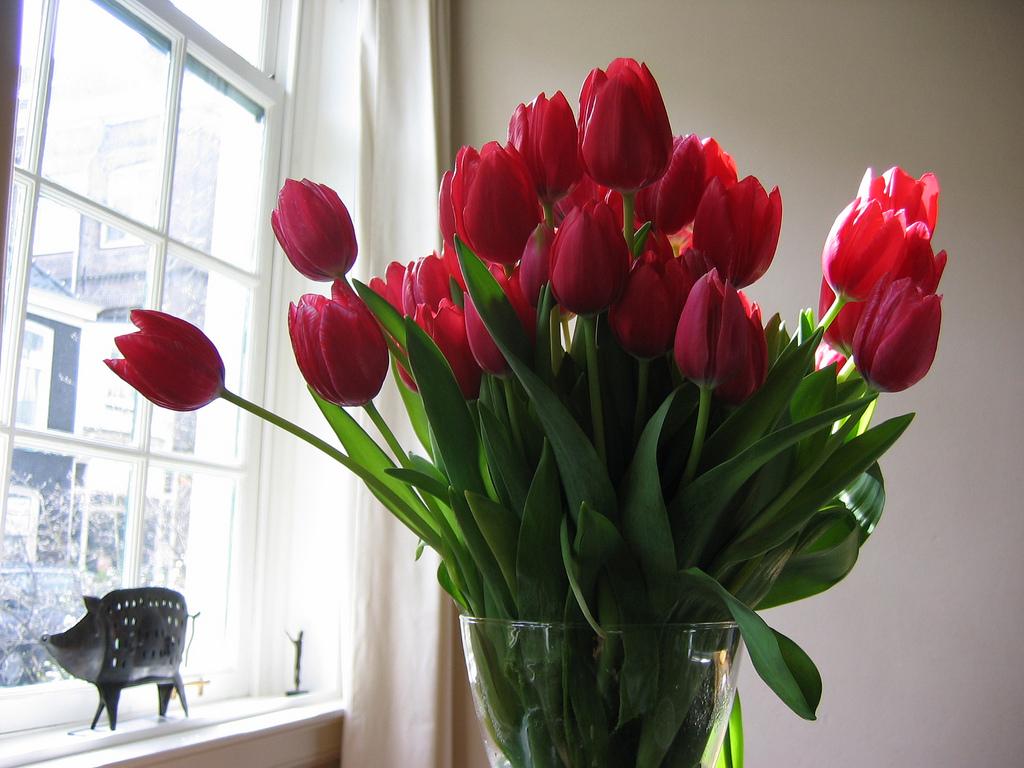 Tulpen in vaas.jpg