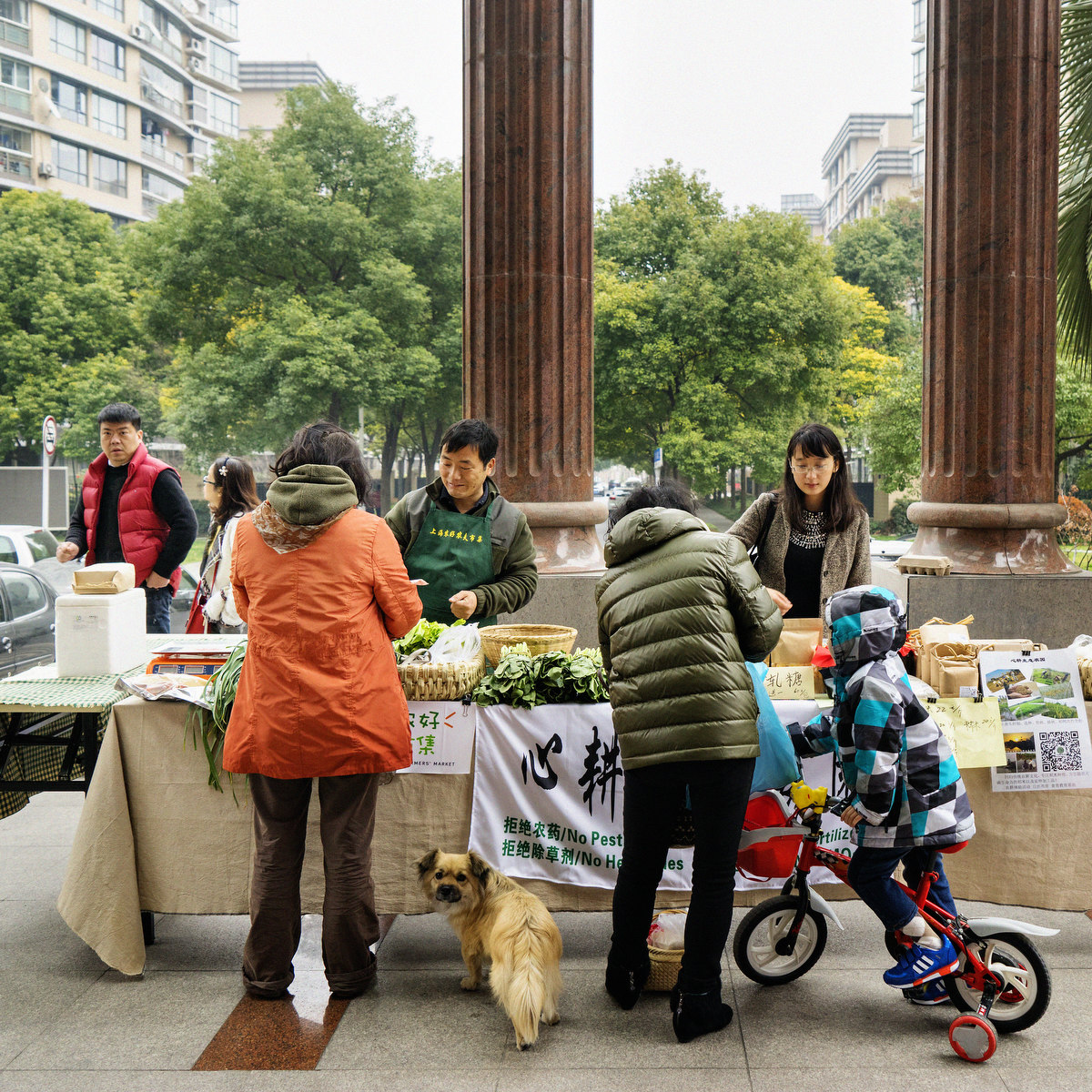 DH_CHINA_2015_ORGANIC FOOD_0479FIN_SQ_1200PIX.jpg