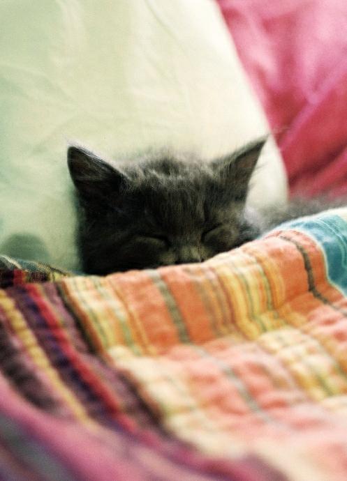 all tucked in.jpg