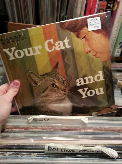 your cat and you.jpg