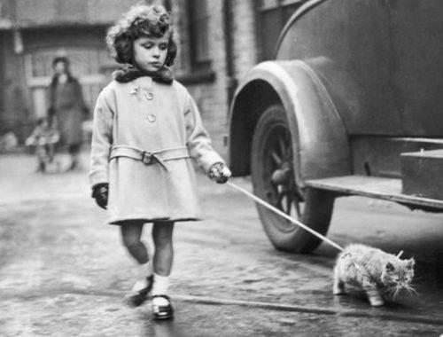 kitty on a leash.jpg