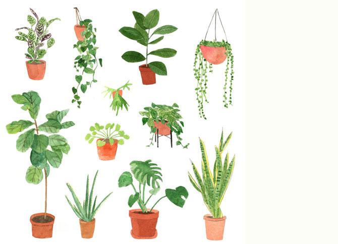 plants_670.jpg