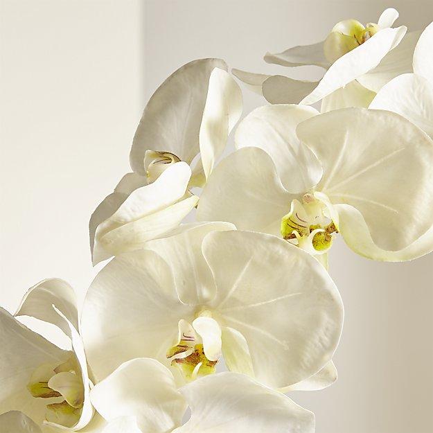 white-orchid-stem.jpg