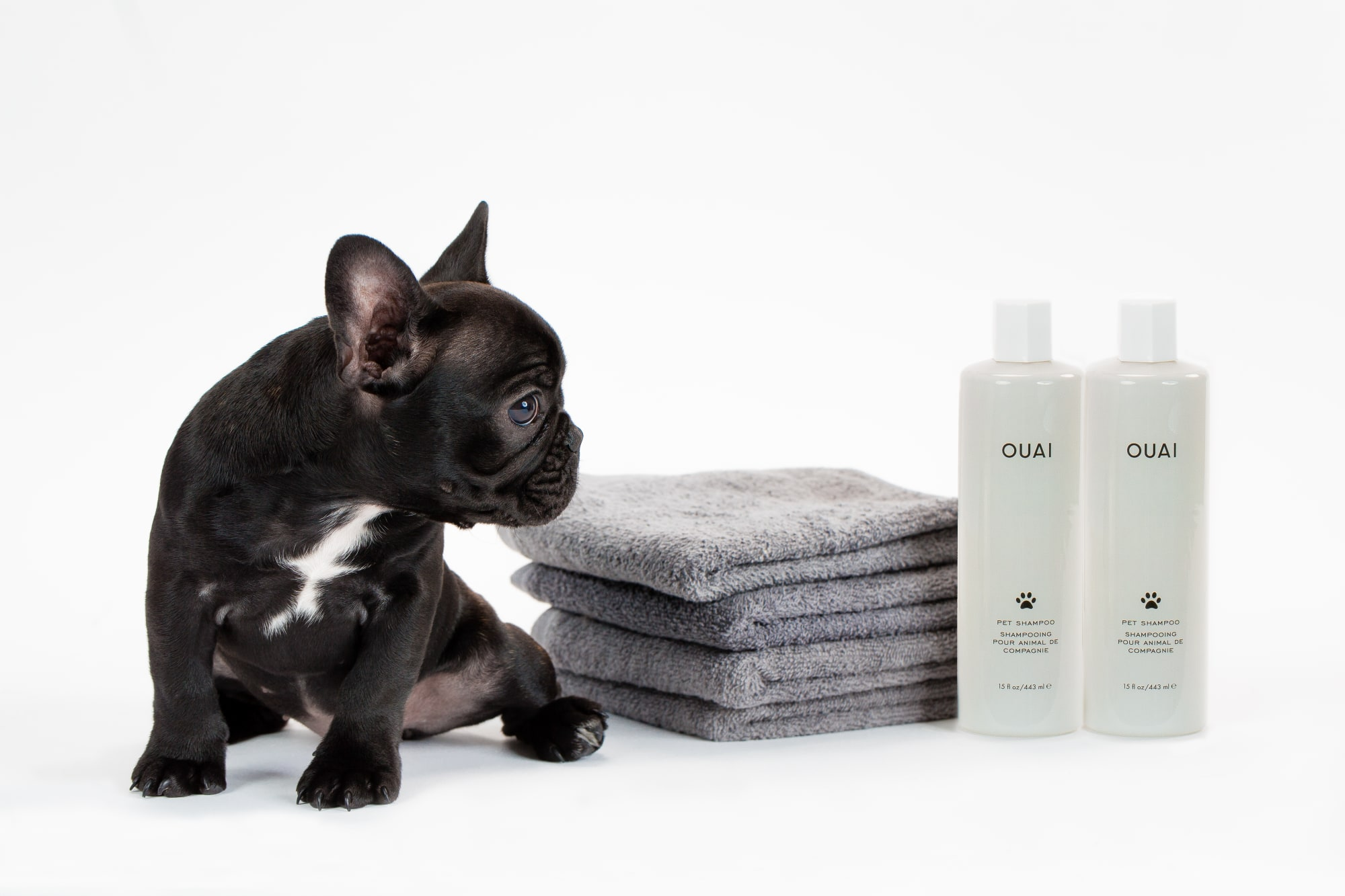 ouai pet shampoo french bull dog puppy.jpg