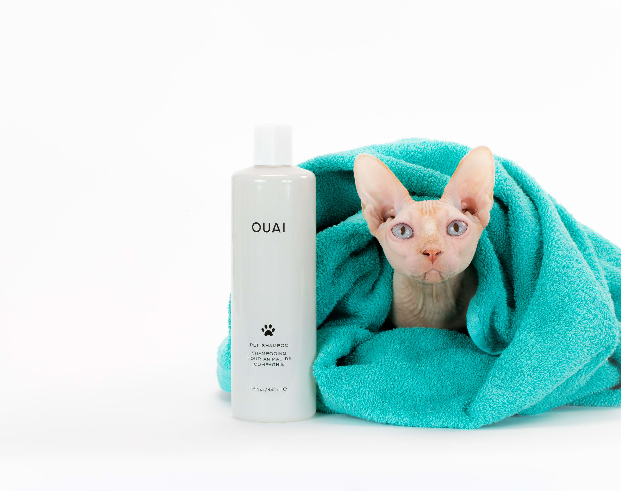 ouai pet shampoo hairless cat.jpg