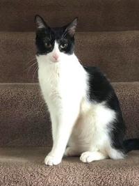 allison's cat.jpg