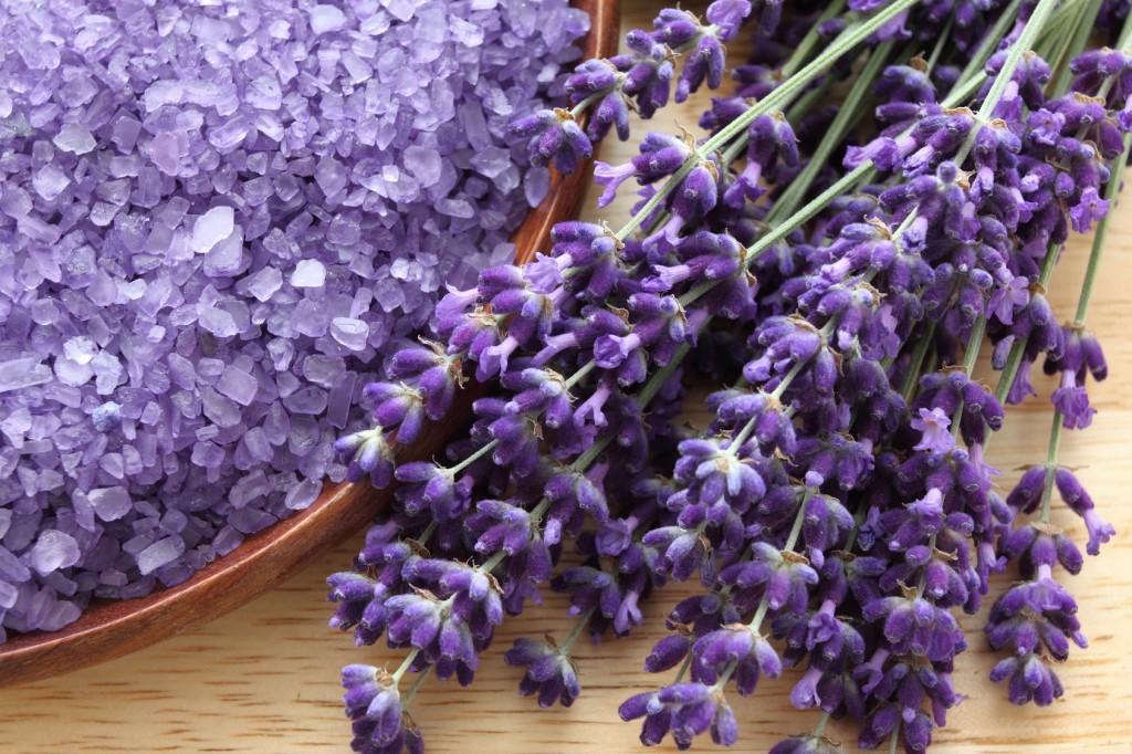 Lavender-1024x682.jpg