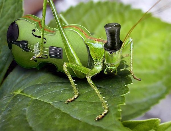 Fancy Music