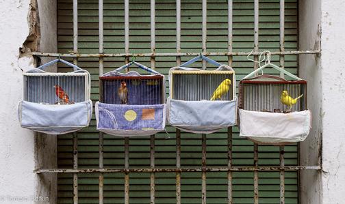 Barcelona Birds