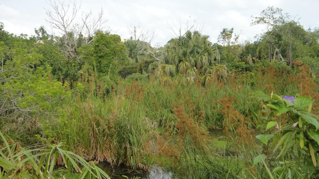 David's Pond, Paget Marsh
